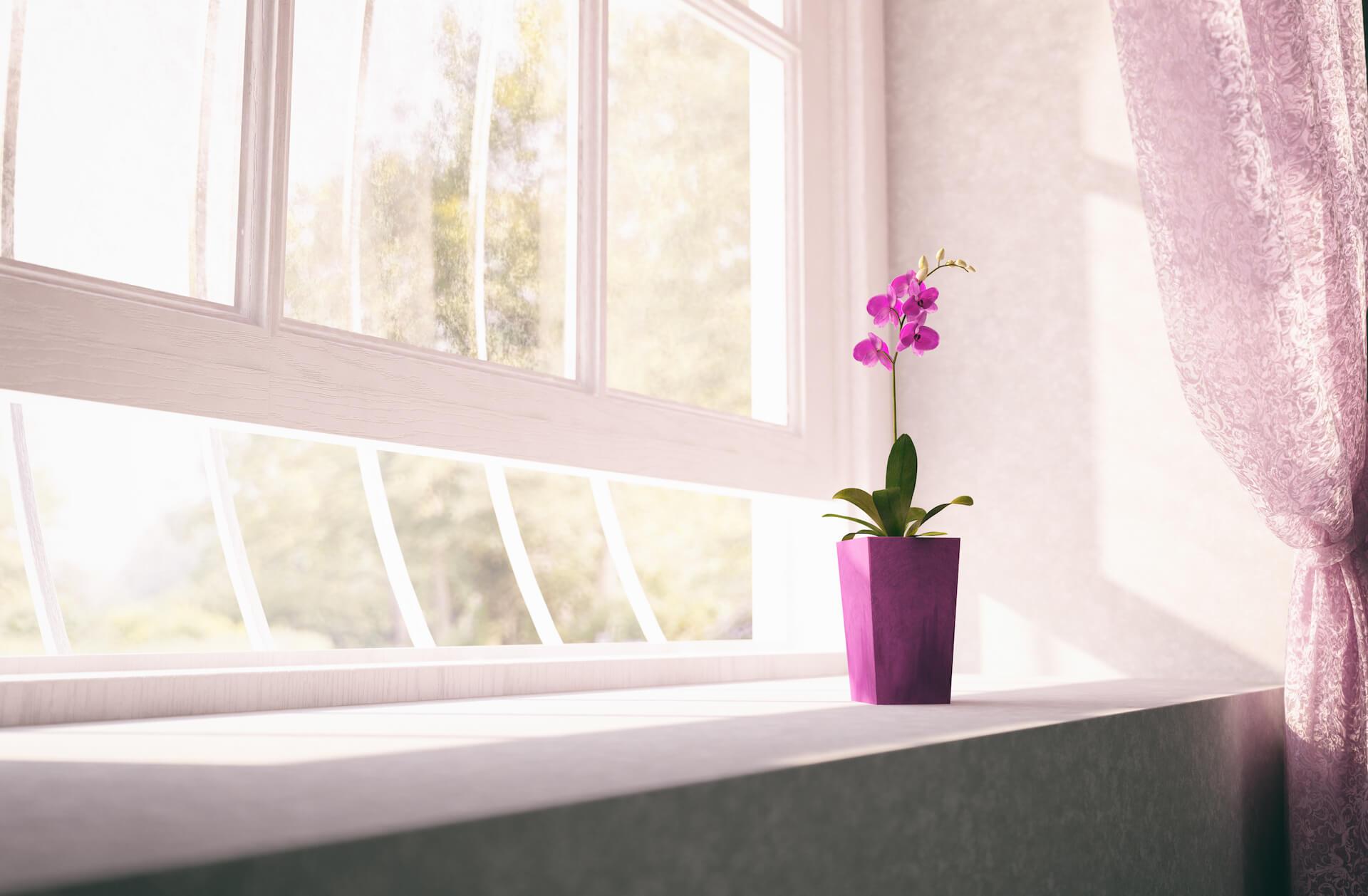 Extraordinary window treatments